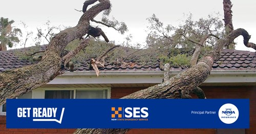 Tree down on roof graphic