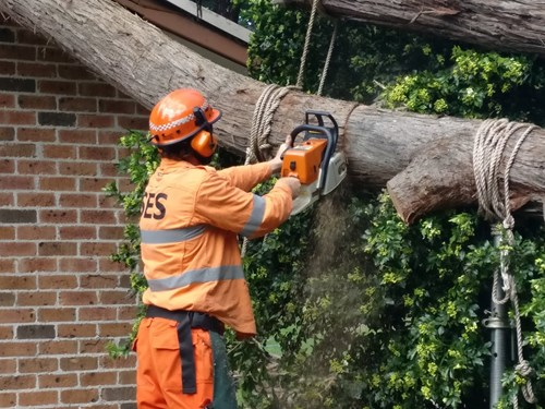 SES Person Cutting Tree