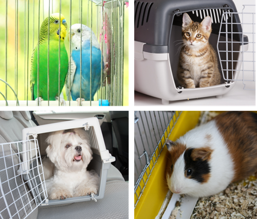 Crates, carriers and cages keep pets safe in emergencies