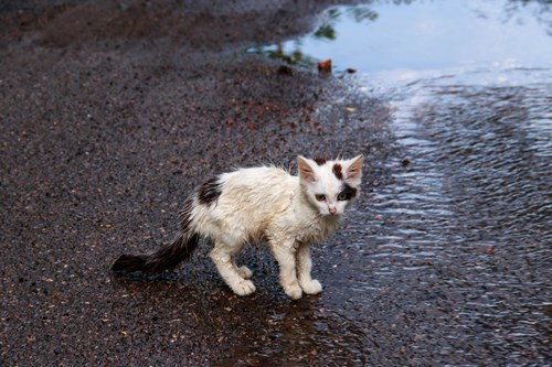 Cat in flood